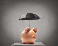 Piggy with an Umbrella. Piggy protecting itself with a little black umbrella royalty free stock images