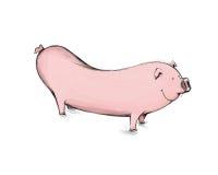Piggy Weenie Arkivfoton