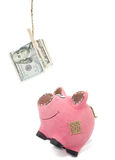Piggybank catch dollars Royalty Free Stock Photos