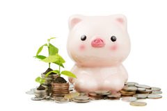 Piggybank with coin Stock Photography
