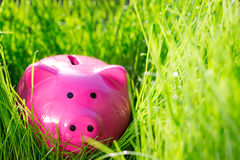 Piggybank on green spring grass Stock Photography