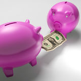 Piggybanks Fighting Over Money Showing Banking Problems. And Financial Security Royalty Free Stock Images