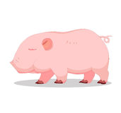 Pigless so cute Stock Photography