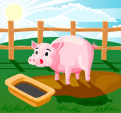 Piglet. A piglet standing in the mud and drinking from trough. Picture has layers to easy edit Stock Images