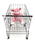 Piglet in Car Royalty Free Stock Photos