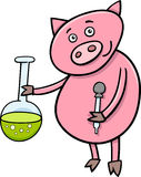 Piglet at chemistry cartoon illustration Royalty Free Stock Photography