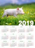 Piglet in grass. Calendar 2019 year. Baby funny piglet in grass. Calendar 2019 year stock photo
