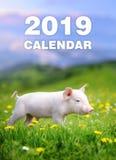 Piglet in grass. Calendar 2019 year. Baby funny piglet in grass. Calendar 2019 year royalty free stock photo