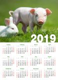 Piglet in grass. Calendar 2019 year. Baby funny piglet in grass. Calendar 2019 year stock photography