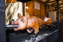 Piglet roast. Roasting a whole piglet in Szeged, Hungary royalty free stock image
