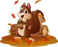 Pigna divertente della tenuta dello scoiattolo del fumetto nel tempo di autunno Fotografie Stock