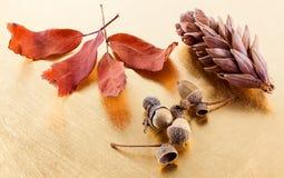 Pigna, ghianda e foglie di autunno Fotografie Stock