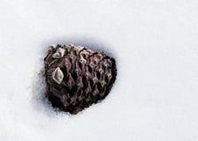 Pigna parzialmente sepolta nella neve Immagini Stock
