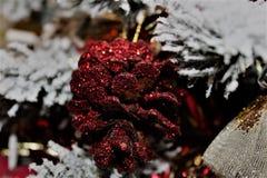 Pigna rossa vibrante Fotografia Stock Libera da Diritti