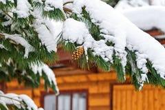 Pigne su un ramo innevato di un pino contro una casa di legno del paese Racconto e cartolina di Natale di Natale fotografie stock libere da diritti
