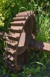 Pignon conique dans les mauvaises herbes Photo libre de droits