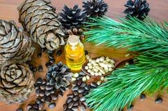 Pignons et huile de cèdre Images libres de droits