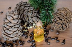 Pignons et huile de cèdre Photographie stock