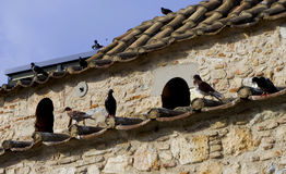 Pigoens on roof Royalty Free Stock Photo