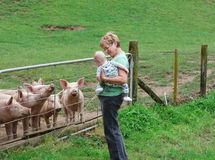Free Pigs Stock Image - 12133521