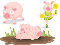 Pigs. An illustration of pigs on white Royalty Free Stock Photos