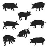 Pigs_Black. Pork icon. Quality black and white vector silhouettes of pigs in a walking position,  on white background Stock Photo
