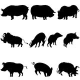 Pigs and boars silhouettes set Stock Image