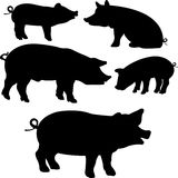 Pigs collection � vector silhouette Royalty Free Stock Images
