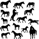 Horse collection –  silhouette Stock Photos