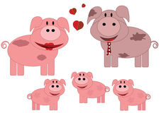 Pigs family Royalty Free Stock Photo