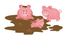 Pigs family. Mother, father and baby Stock Images