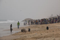Pigs and fishermen in Cape Coast, Ghana Stock Photography