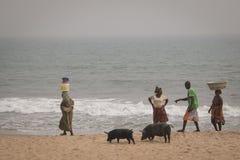 Pigs and fishermen in Cape Coast, Ghana. CAPE COAST, GHANA - JANUARY 2016: Pigs and fishermen on the beach in Cape Coast, Ghana stock photography