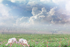 Pigs on flowers field and sky background with happy morning sunl Stock Photography