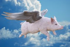 When Pigs Fly, Flying Pig. When pigs fly! A flying pig with wings of feathers flies through the clouds and sky. It`s time to get your business, sales, and Royalty Free Stock Photos
