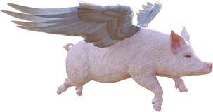 When Pigs Fly, Flying, Isolated. When pigs fly! This pig has wings and is flying through the air. Isolated on white and PNG file available Stock Images