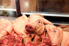 Pigs head in a deli counter. Fresh pork in a meat market display Stock Photography