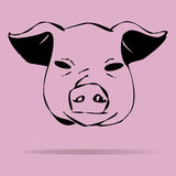 Pigs  illustration on a colored background Royalty Free Stock Photography