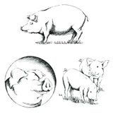 Pigs Illustrations Royalty Free Stock Photos