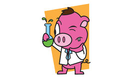 Pigs in the laboratory Royalty Free Stock Photos