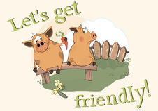 About pigs. Lets get friendly! Stock Photos