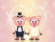 Pigs in love Stock Photos