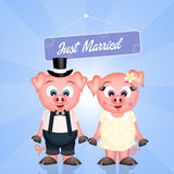Pigs marry Stock Photography