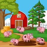 Pigs in muddy puddles on the farm. Illustration Stock Photography