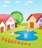 Pigs och hus Fotografering för Bildbyråer
