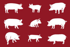 Pigs Red. Pork icon. Vector Image, pig silhouette, in Curl Tail pose,  on red background Royalty Free Stock Photo