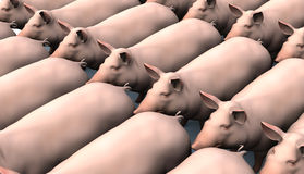 Pigs in rows. Lots of pink pigs in rows, 3D Royalty Free Stock Images