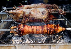 Pigs and sheep on a spit. Whole pig  and sheep  of roasting on a spit Stock Photos