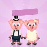 Pigs spouses Stock Photos