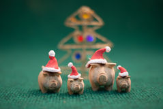 Pigs wearing christmas hat. Three pigs wearing christmas hat stand on green background stock photo